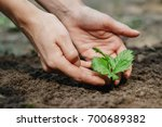 women's hands put a sprout in... | Shutterstock . vector #700689382