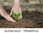 women's hands put a sprout in... | Shutterstock . vector #700689412