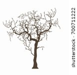 tree without leafage isolated...   Shutterstock . vector #700711222