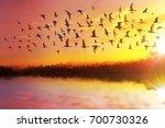 silhouette of great egret... | Shutterstock . vector #700730326