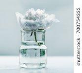 Single Peony Flower In Small...