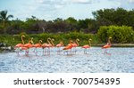 flamingoes at celestun... | Shutterstock . vector #700754395