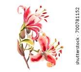 painted pink lilies. bouquet.... | Shutterstock . vector #700781152