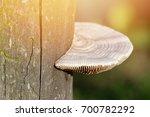 mushroom on wood with warm light | Shutterstock . vector #700782292