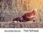 chicken at hen house from... | Shutterstock . vector #700789468