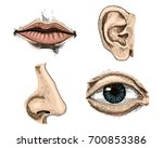 human biology  organs anatomy... | Shutterstock .eps vector #700853386