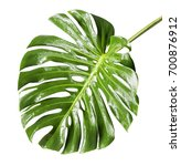 large tropical shiny jungle... | Shutterstock . vector #700876912