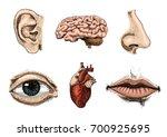 human biology  organs anatomy... | Shutterstock .eps vector #700925695