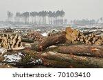a forest cut down during winter. | Shutterstock . vector #70103410