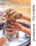 Small photo of Bathing the dog At lunch on a sunny day.