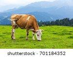 cow eating grass | Shutterstock . vector #701184352