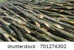 pile of bamboo stalks. | Shutterstock . vector #701276302