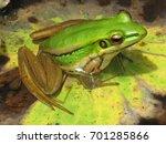 frog   Shutterstock . vector #701285866