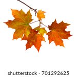 branch of autumn maple leaves... | Shutterstock . vector #701292625