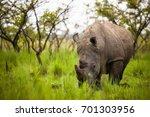 Rhino   Ziwa Rhino Sanctuary  ...