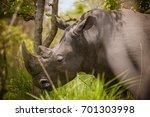 rhino   ziwa rhino sanctuary  ... | Shutterstock . vector #701303998