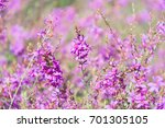 amazing floral background of... | Shutterstock . vector #701305105