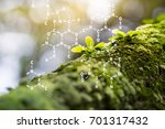 plants background with... | Shutterstock . vector #701317432