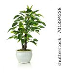 Small photo of A re shoot at a higher resolution of a miniature artificial tree shot against a white background. Concept for interior design, mock-ups and building illustrations. isolated.