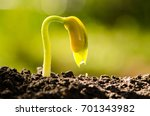 agriculture seed plant grow... | Shutterstock . vector #701343982