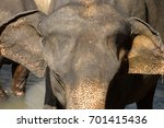 close up big asian elephant... | Shutterstock . vector #701415436