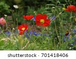 close up of red flowers | Shutterstock . vector #701418406