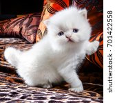 Stock photo white kitten 701422558