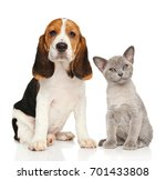 Stock photo puppy and kitten together portrait on white background 701433808