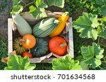 pumpkins and squashes harvest... | Shutterstock . vector #701634568
