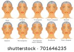 types of faces. face shapes. a... | Shutterstock .eps vector #701646235