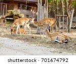 deer in forest   Shutterstock . vector #701674792