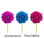 Three Dahlia Aster Flower Set....