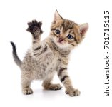 Stock photo small brown kitten isolated on white background 701715115