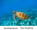 Small photo of Sea turtle in blue ocean closeup. Green sea turtle closeup. Endangered species of tropical coral reef. Tortoise photo. Tropic seashore fauna. Summer travel seaside activity. Snorkeling with sea turtle