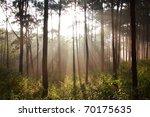 on the morning sunbeam shinning ... | Shutterstock . vector #70175635