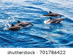 wild dolphins in the pacific... | Shutterstock . vector #701786422