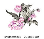 hand drawn pink flower isolated ...   Shutterstock . vector #701818105
