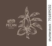 pecan  branch of pecan  nuts...