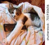 tv maniac cat. cat sleeping and ... | Shutterstock . vector #701930656