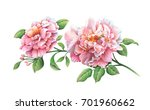 bouquet of pink peony flowers... | Shutterstock . vector #701960662