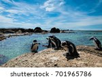 penguins on vacation at... | Shutterstock . vector #701965786