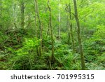 scenery from the deep forest of ... | Shutterstock . vector #701995315