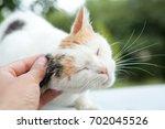 Cute Cat Cuddled By A Hand ...