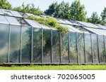 Old Damaged Greenhouse