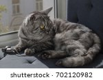 Stock photo cat with a toy mouse on a window sill 702120982