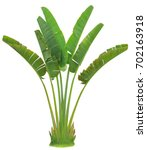 banana leaf on isolate and...   Shutterstock . vector #702163918