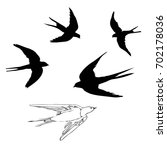swallow silhouette  vector ... | Shutterstock .eps vector #702178036
