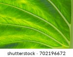 green leaf background and...   Shutterstock . vector #702196672