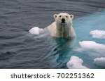 polar bear swimming in icy... | Shutterstock . vector #702251362