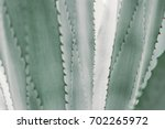 abstract pattern of agave plant. | Shutterstock . vector #702265972